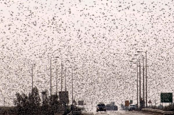 cicada_swarm_2013