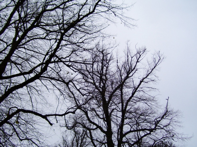 black_branches_grey_sky
